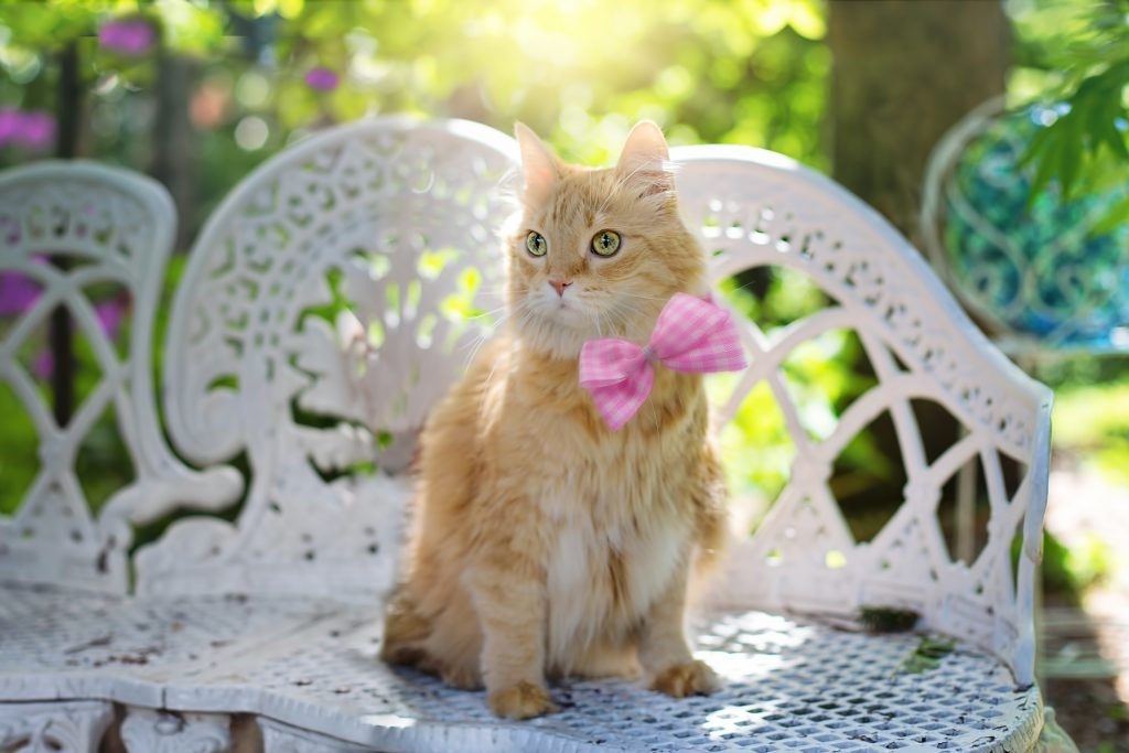Orange cat in pink bow tie